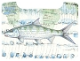 MFC Boat Box Decal Currier Bonefish