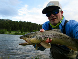 Upper madison river fishing report beartooth flyfishing for Upper madison fishing report